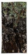 Ancient Olive Tree Beach Towel
