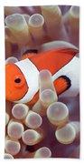 Anemone And Clown-fish Beach Towel