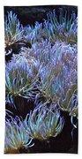 Anemone Beach Towel