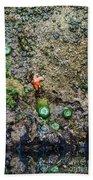 Anemone Reflection  Beach Sheet