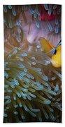 Anemonefish Beach Towel