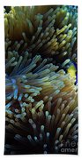 Anemonefish Hiding Beach Towel