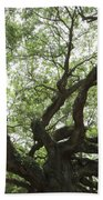 Angel Oak Branches Beach Towel