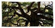 Angel Oak In November Beach Towel