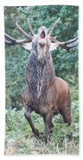 Angry Stag Beach Towel