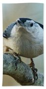 Angry White Breasted Nuthatch Beach Towel