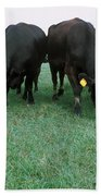 Angus Cattle Beach Towel
