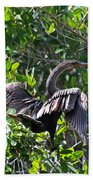 Anhinga In The Sun Beach Towel