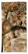 Animal - Squirrel - The Squirrel Beach Towel