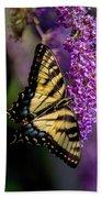 Anise Swallowtail Beach Towel