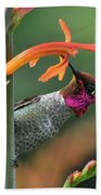 Anna's Hummingbird 1 Beach Towel