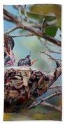 Anna's Hummingbirds Beach Towel