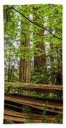 Another Split Redwood Beach Towel