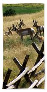Antelope 2 Beach Towel
