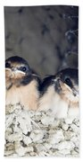 Antelope Island Birds Beach Towel