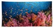 Anthias Fish And Soft Corals, Fiji Beach Towel