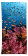 Anthias Fish And Soft Corals, Fiji Beach Towel