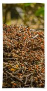 Anthill In Forest Beach Towel
