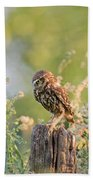 Anticipation - Little Owl Staring At Its Prey Beach Sheet