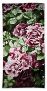 Antique Pink Roses Beach Towel