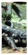 Appalachian Slimy Salamander Beach Towel