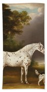 Appaloosa Horse And Spaniel Beach Towel