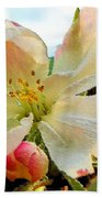 Apple Blossom Beach Towel