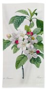 Apple Blossom Beach Towel by Pierre Joseph Redoute
