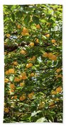 Apricots Beach Towel
