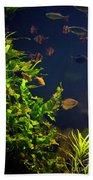 Aquarium Fish And Plants In Zoo Beach Towel