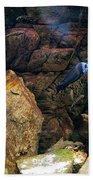 Aquarium Stones Arrangement Beach Towel
