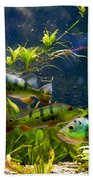 Aquarium Striped Fishes Group Beach Towel