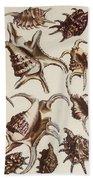Aquatic Animals - Conch - Shells - Snails Beach Towel