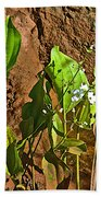 Aquatic Arrowhead In Iguazu Falls National Park-argentina  Beach Towel
