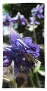 Aquilegia -  Columbine Beach Towel