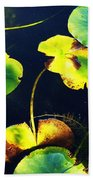 Arboretum Morning Beach Towel
