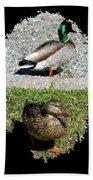 Arboretum Quackers Beach Towel