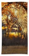 Arch Of Trees Beach Towel