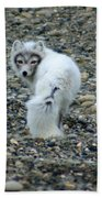 Arctic Fox Beach Towel