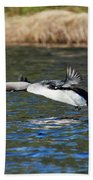 Arctic Loon Take Off Beach Towel