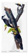 Arctic Three-toed Woodpecker Audubon Birds Of America 1st Edition 1840 Octavo Plate 268 Beach Towel