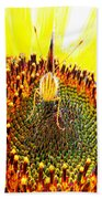 Are You Looking At Me - Butterfly Beach Towel
