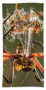 Argiope Spider Wrapping A Hornet Beach Towel