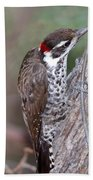 Arizona Woodpecker Beach Towel