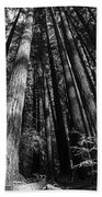 Armstrong National Park Redwoods Filtered Sun Black And White Beach Towel