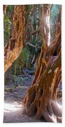 Arrayanes Grove On Trail In Arrayanes National Park Near Bariloche-argentina Beach Towel
