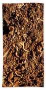 Art Of A Dinosaur Dig Beach Towel