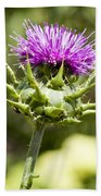 Artichoke Thistle 3 Beach Towel
