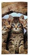 Three Cats Beach Towel