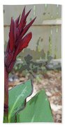 Artistic Red Canna Lily Beach Towel